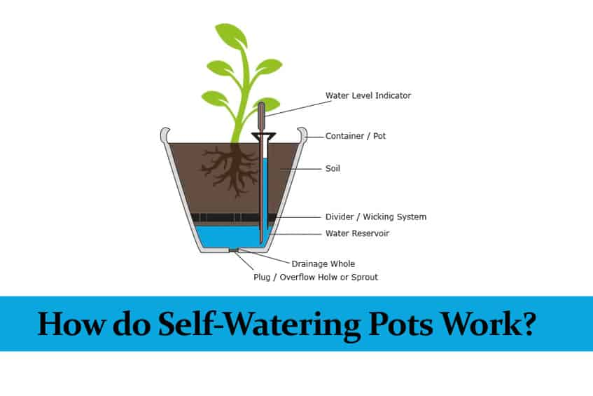 How Do Self Watering Pots Work With Infographic