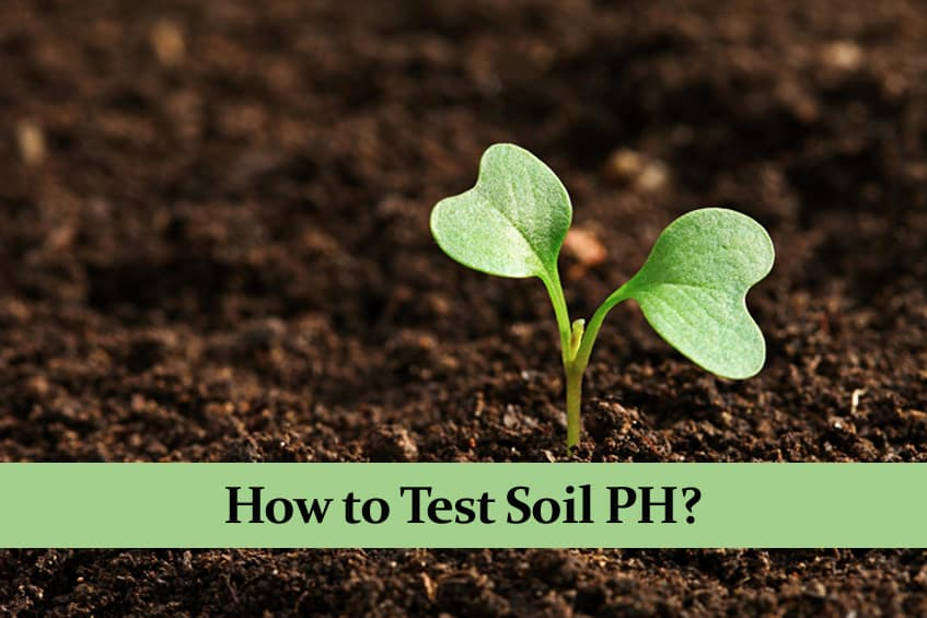 How to Test Soil PH?   Without and with a Commercial Tester