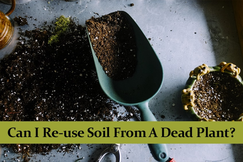 Can I Re-use Soil From A Dead Plant?