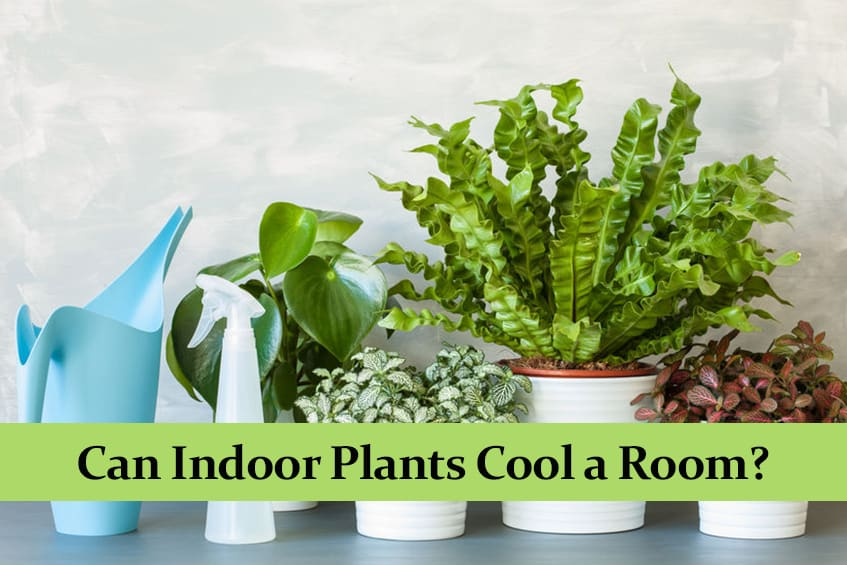 Can Indoor Plants Cool a Room?