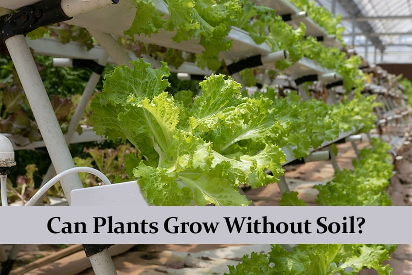 Can Plants Grow Without Soil?