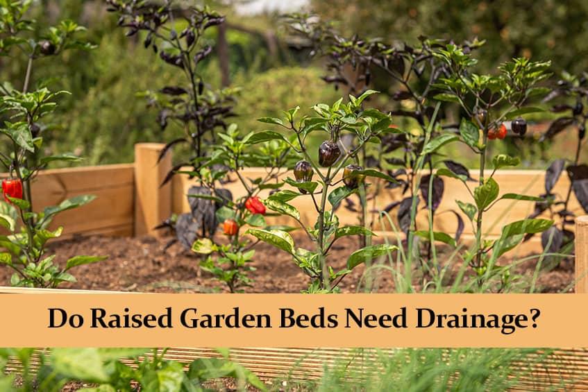 Do Raised Garden Beds Need Drainage?