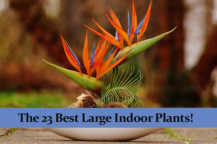 The 23 Best Large Indoor Plants for Making Your Home Beautiful