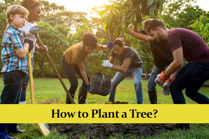 How to Plant a Tree || Step by Step Guide