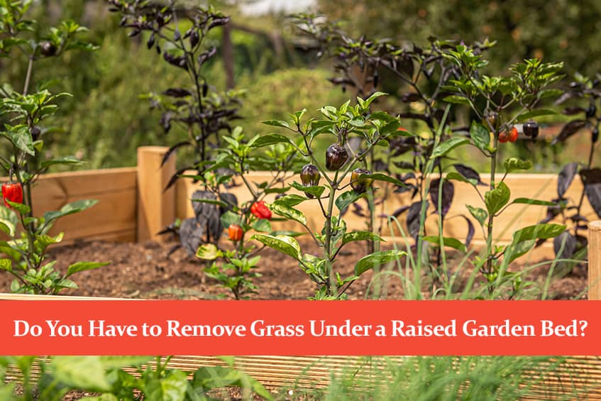 Do You Have to Remove Grass Under a Raised Garden Bed?